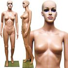 Economy Plastic Ladies Full Size Mannequin - Right Arm Bent with Removable Head